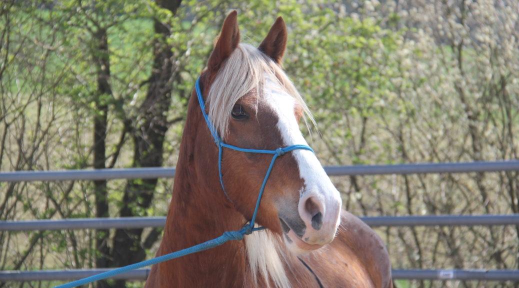 gewaltfreie kommunikation pferd